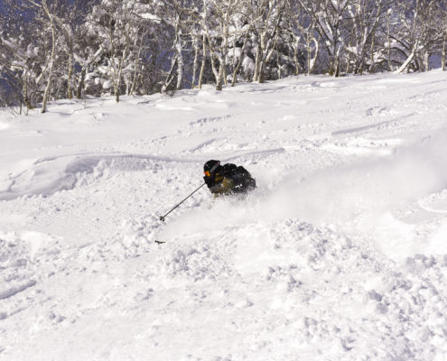Powder skiing Furano